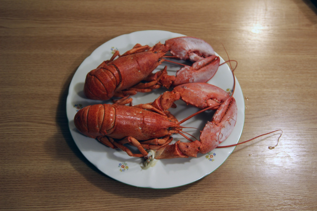 Free image: American lobster